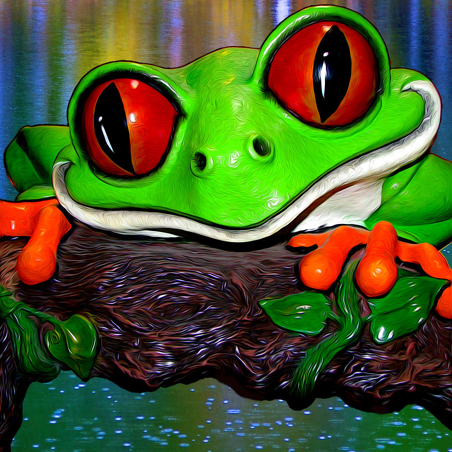Rain Forest Frog Photograph