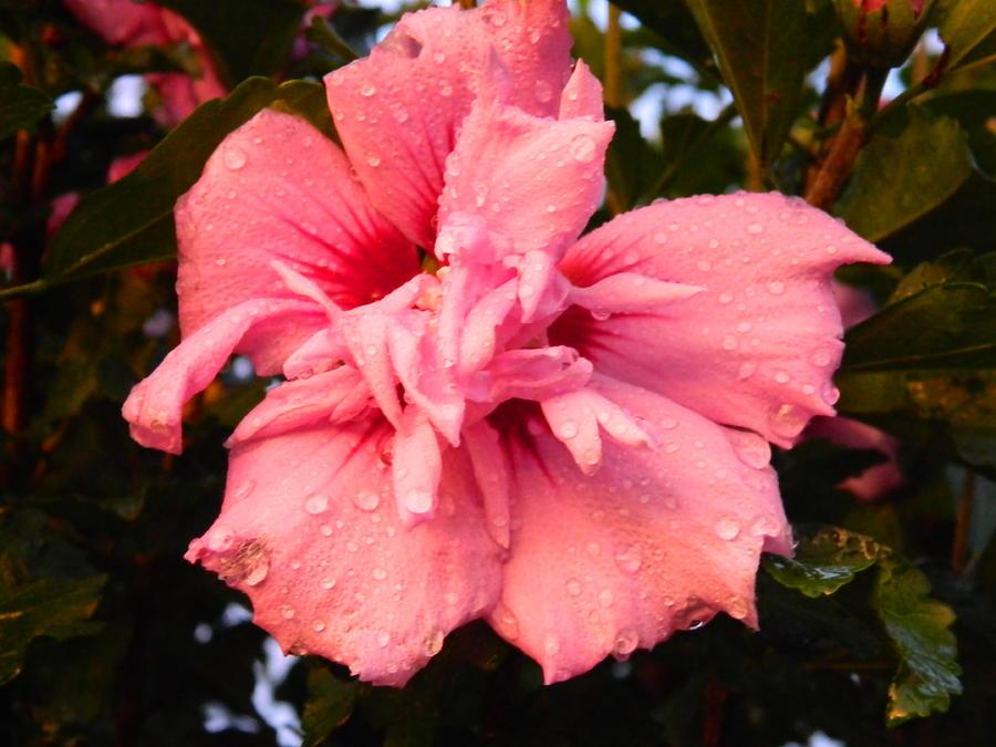 Bloom Photograph - Rain Kiss by Linda Brown