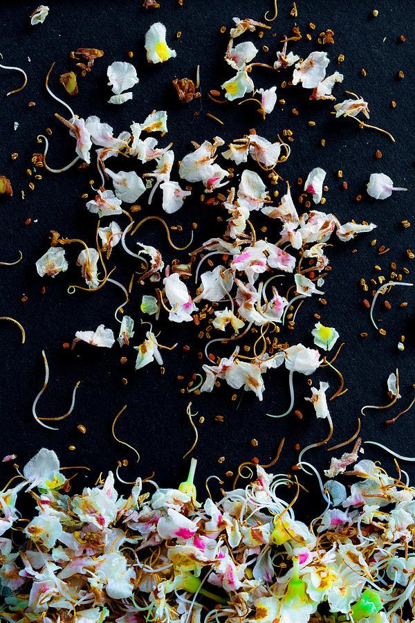 Petals Photograph - Rain Of Petals by Edgar Laureano