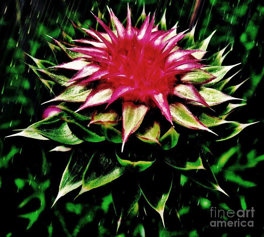 Flower Photograph - Rain by Scott Allison