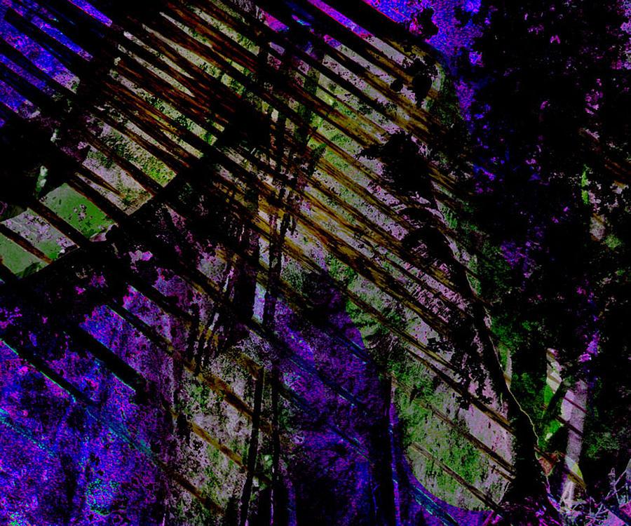 Rain Shadow by Aurora Levins Morales