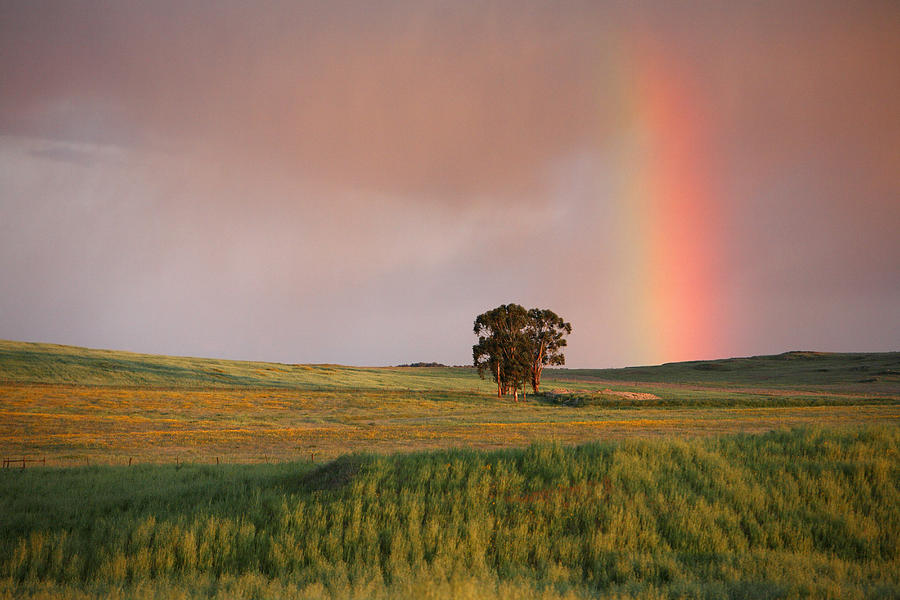 Rainbow And Fields At Twilight Alentejo Photograph by Duncan Usher