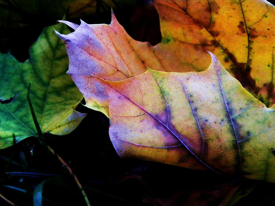 Leaves Photograph - Rainbow Autumn by Christian Rooney