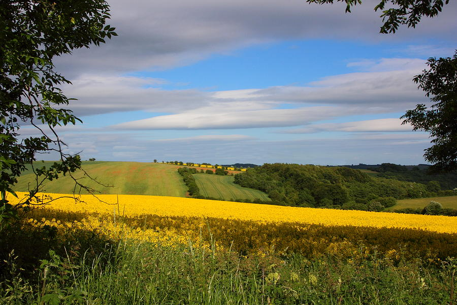 Colourful Photograph - Rainbow Fields by Theresa Selley