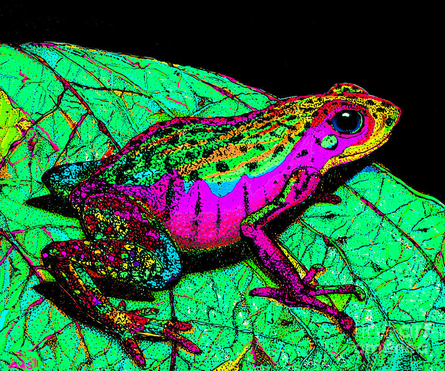 Rainbow Frog 3 Photograph By Nick Gustafson