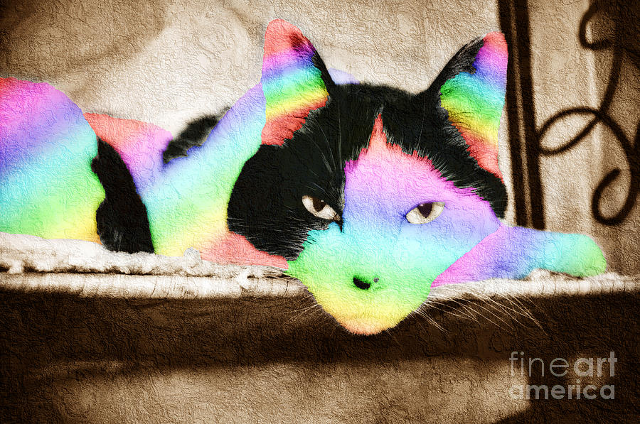 Cat Photograph - Rainbow Kitty Abstract by Andee Design