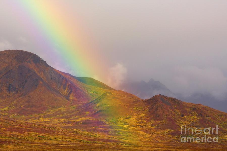 Rainbow Over Fall Tundra in Denali Photograph by Yva Momatiuk John Eastcott