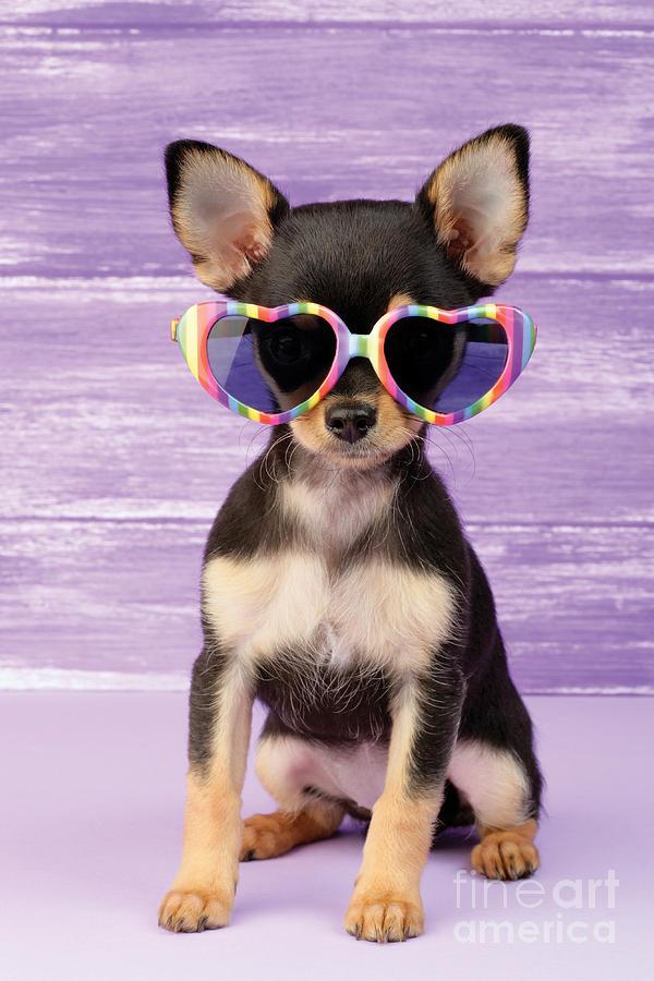Sunglasses Digital Art - Rainbow Sunglasses by Greg Cuddiford