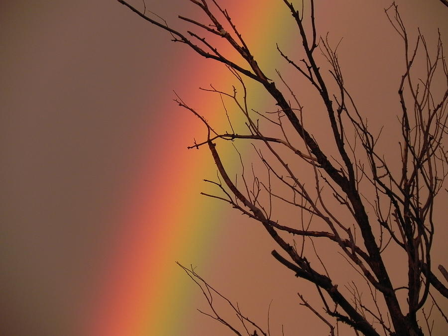Rainbow Photograph - Rainbow Tree by Adrienne Petterson