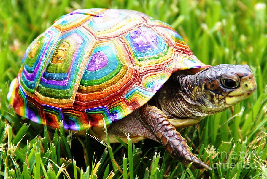 Rainbow Turtle Photograph By Nicole Miinch