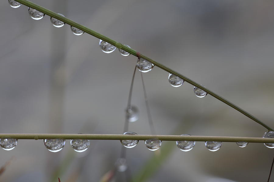Abstract Photograph - Raindrops Clinging To Grass Stems by Ulrich Kunst And Bettina Scheidulin