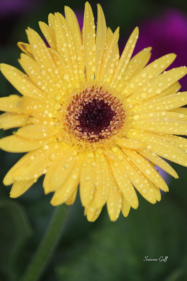 Yellow Photograph - Raindrops Keep Falling On My Head by Suzanne Gaff