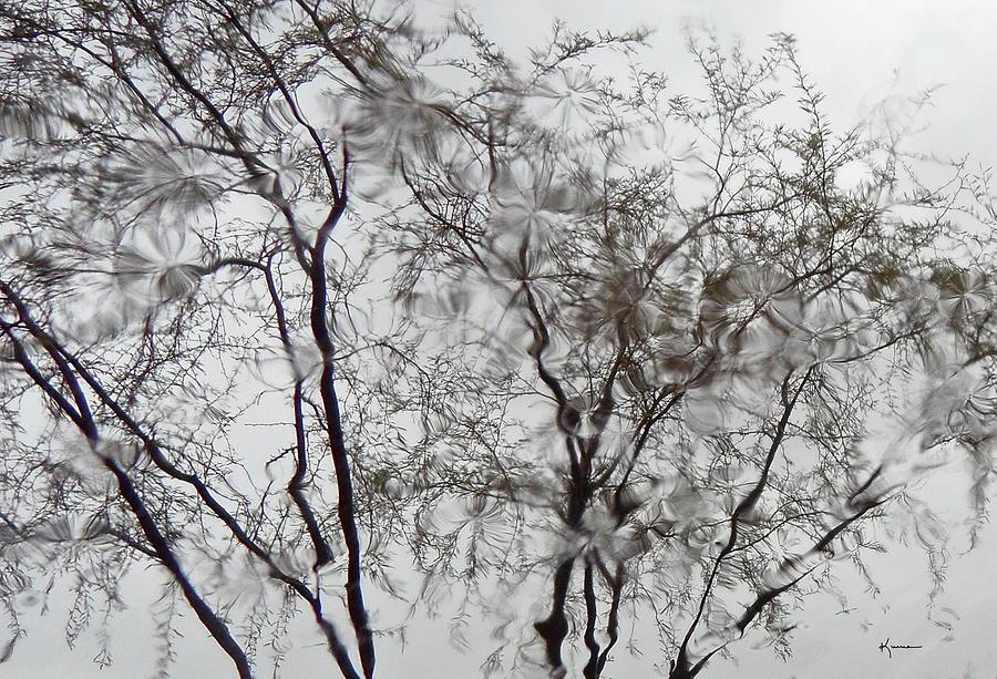 Rain Photograph - Raindrops by Kume Bryant
