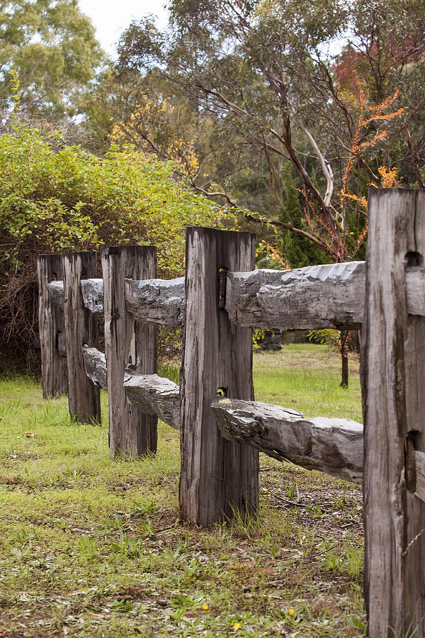 Rustic Photograph - Raindrops On Rustic Wood Fence by Michelle Wrighton
