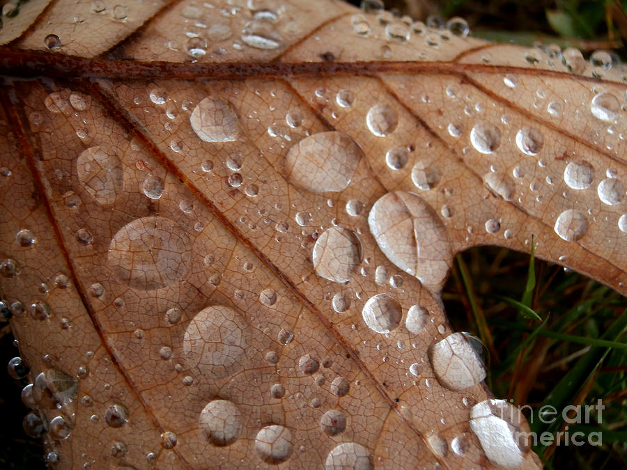 Macro Photograph - Raindrops  by Steven Valkenberg