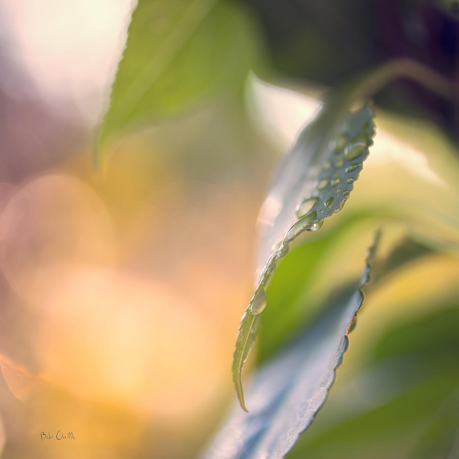 Rain Photograph - Raindrops Three by Bob Orsillo