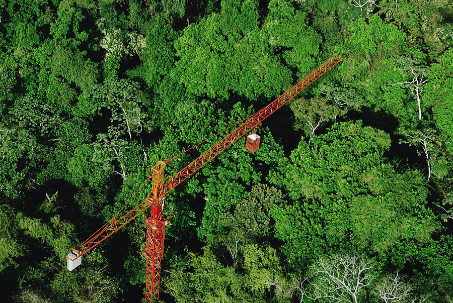 Rainforest Canopy Research Crane Stri Photograph by Mark Moffett