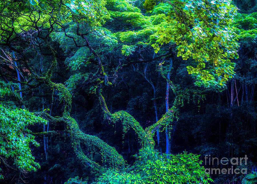 Rainforest Photograph - Rainforest In Waimea Valley by Lisa Cortez