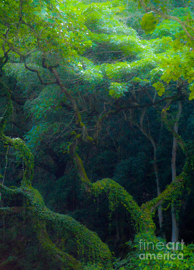 Rainforest Photograph - Rainforest In Waimea Valley Too by Lisa Cortez
