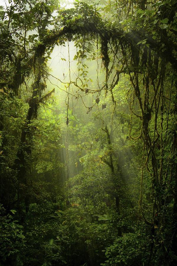 Rainforest Photograph by Mike Lanzetta