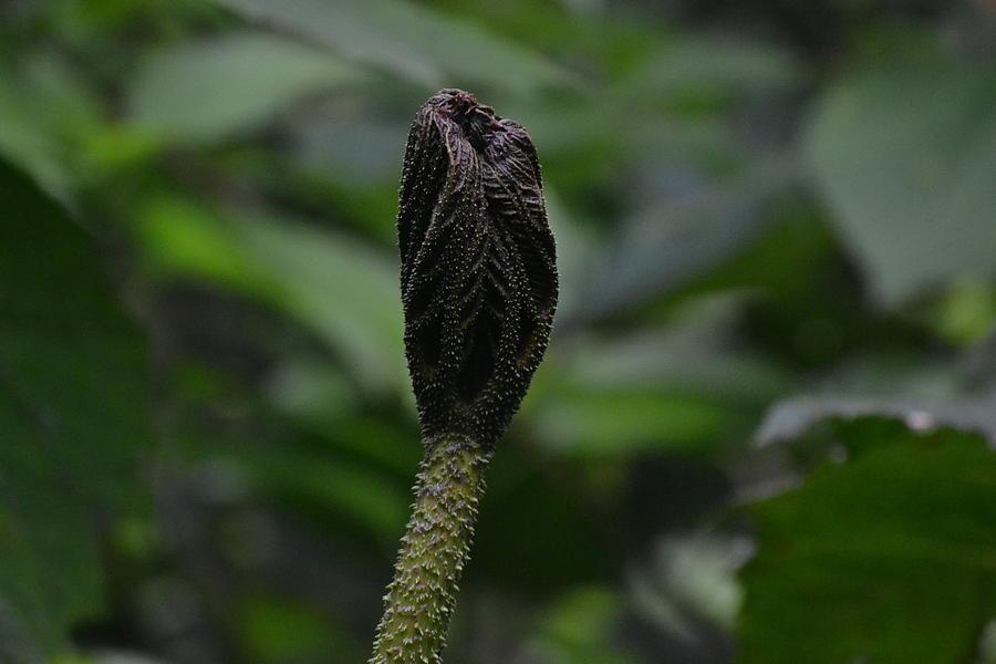 Plant Photograph - Rainforest Pod by Bill Mock
