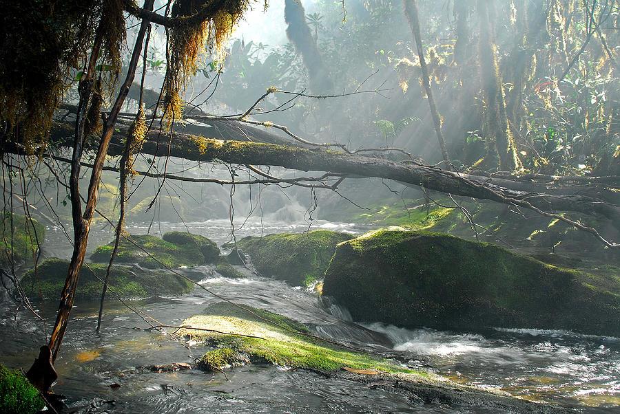 Landscape Photograph - Rainforest Stream by Stefan Carpenter