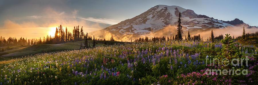 Rainier Golden Light Sunset Meadows Photograph