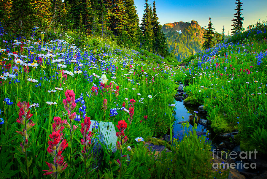 America Photograph - Rainier Wildflower Creek by Inge Johnsson