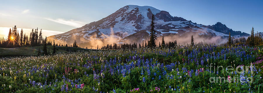 Rainier Photograph - Rainier Wildflower Meadows Pano by Mike Reid