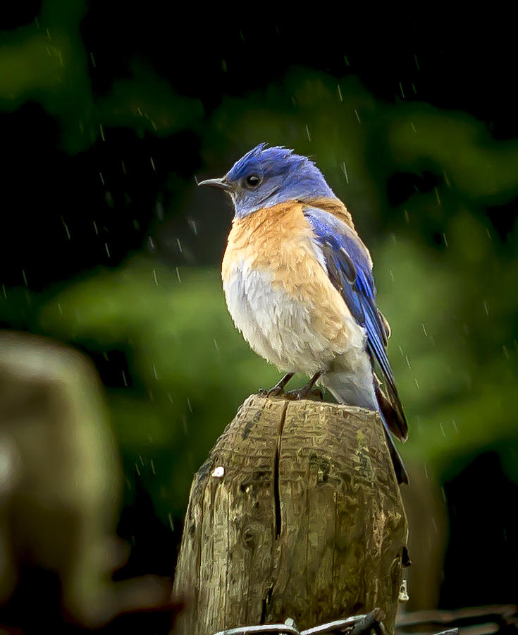 Animals Photograph - Raining by Jean Noren