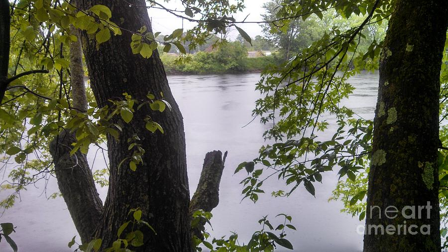River Photograph - Rainy Day At The River by Lisa Gifford