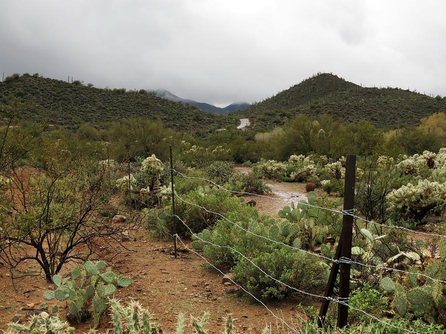 Arizona Photograph - Rainy Desert by Laurel Powell