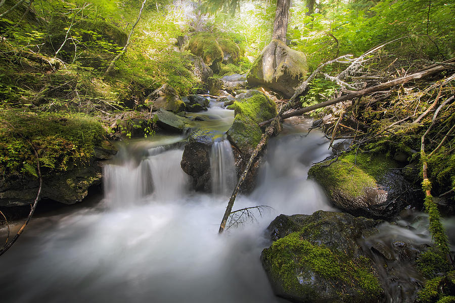 Hike Photograph - Ramona Creek by David Gn