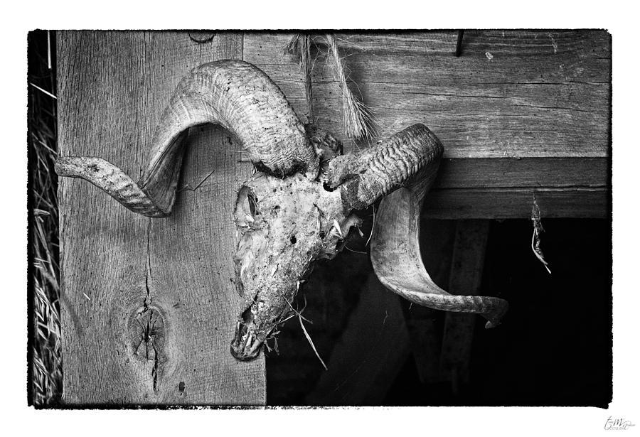 Grunge Photograph - Rams Head - Art Unexpected by Tom Mc Nemar