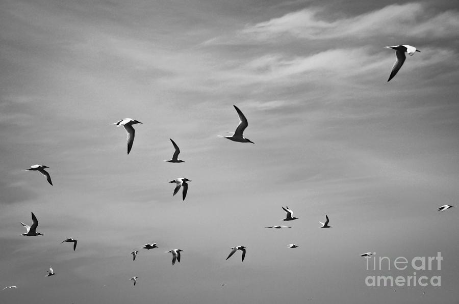 Gulls Photograph - Random Order by Brian Brown