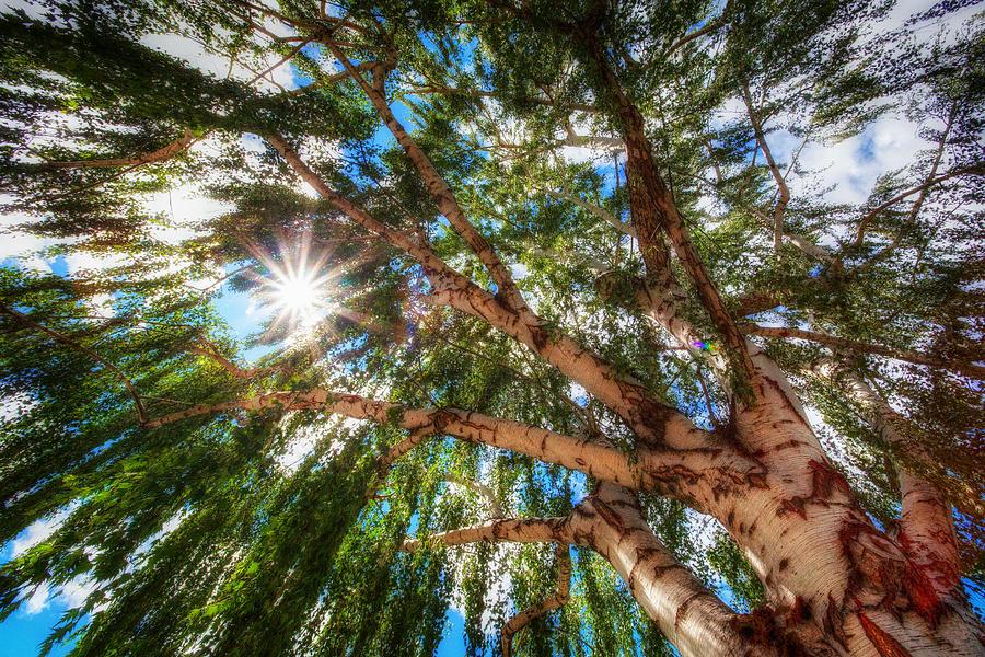 Hdr Photograph - Random Tree Downtown Leavenworth Washington by Rscpics