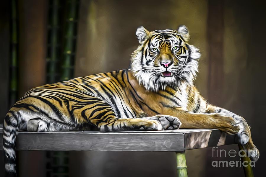 Sumatran Tiger Photograph - Ranu The Sumatran Tiger by Shannon Rogers