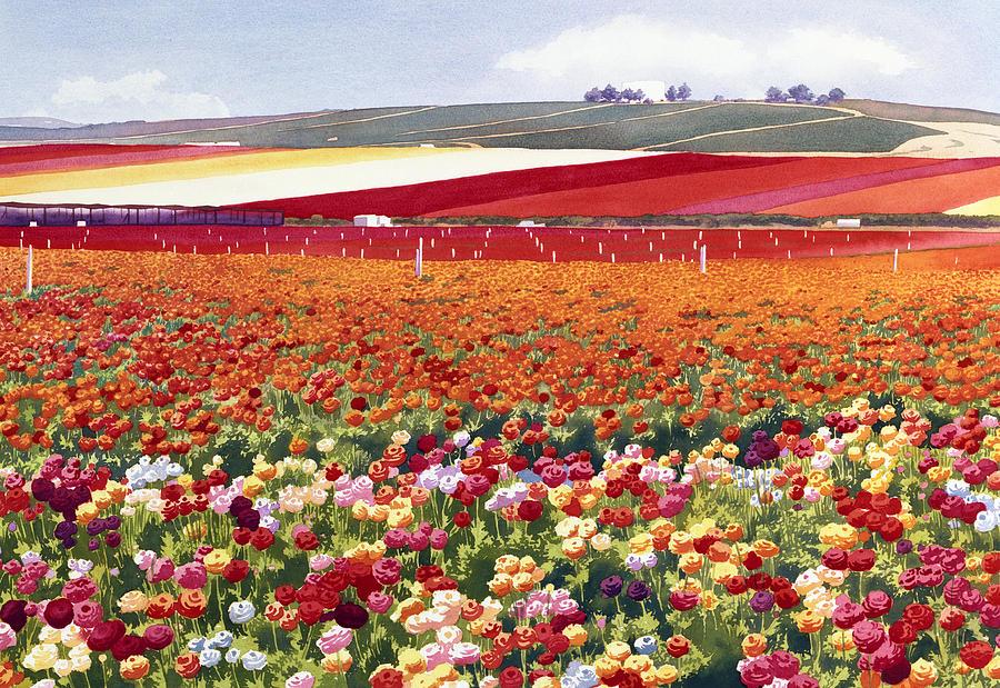 Ranunculus Painting - Ranunculi In Carlsbad by Mary Helmreich