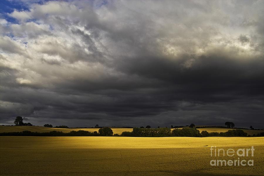 Rape Photograph - Rapefield Under Dark Sky by Heiko Koehrer-Wagner