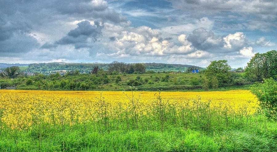 Rapeseed Painting - Rapeseed Field by Paul Muscat