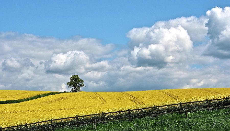Rapeseed Fields Photograph by Flicks Pix