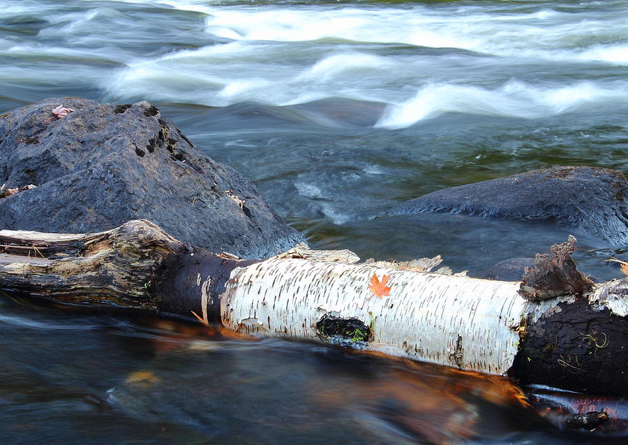Rapids Photograph - Rapids And Birch by Stephen Hobbs