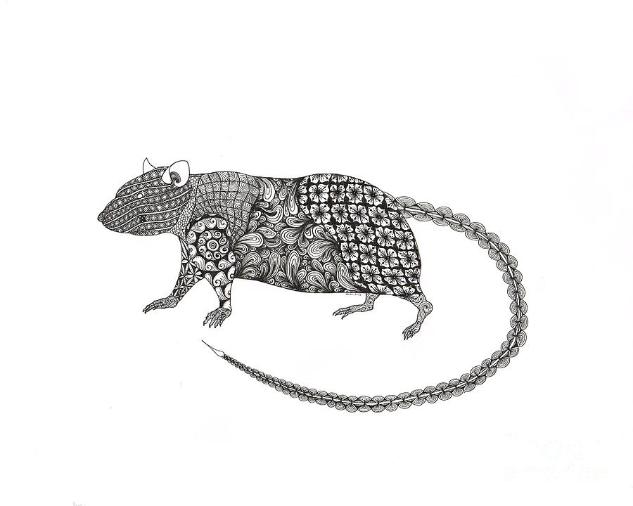 Line Drawing Rat : Rat drawing by jessica swanson