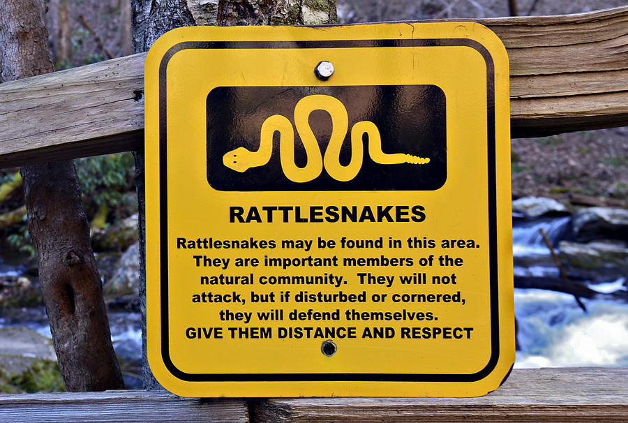 Sign Photograph - Rattlesnakes by Susan Leggett