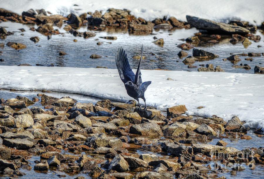 Raven Photograph - Raven Departs by Skye Ryan-Evans