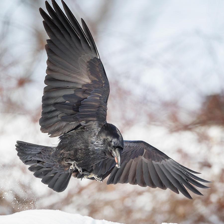 Raven Flight Nude Photos 38