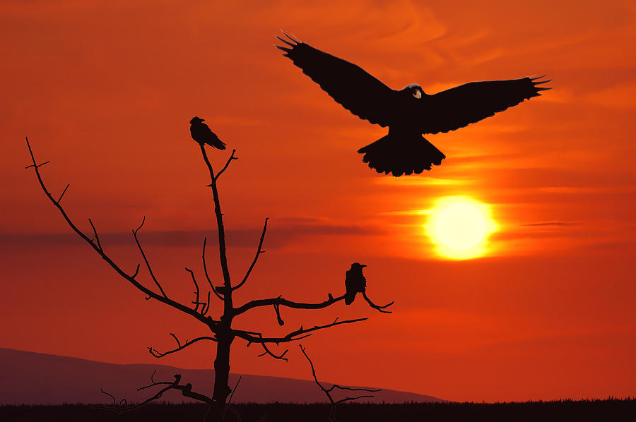 Nature Photograph - Raven Maniac by Ron Day