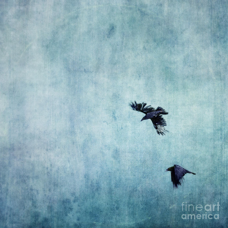 Minimalistic Photograph - Ravens Flight by Priska Wettstein