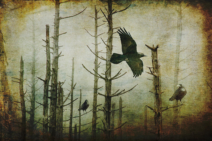 Gothic Photograph - Ravens Of The Mist Artistic Expression by Randall Nyhof