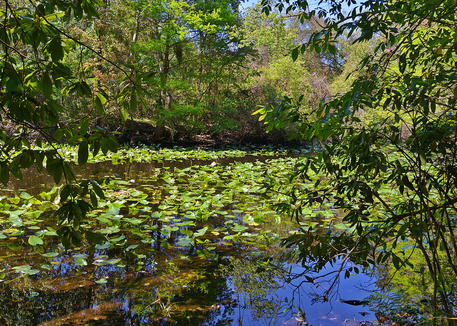 Pond Photograph - Ravine Gardens - A Different Look At Florida by Christine Till